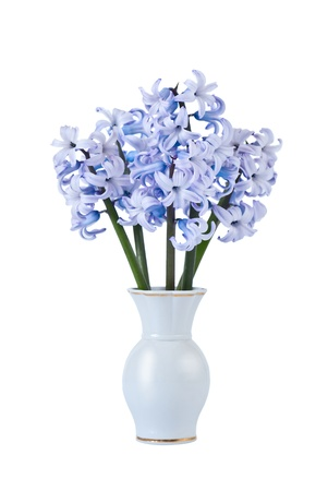 Bouquet of blue hyacinths isolated on white background Stock Photo