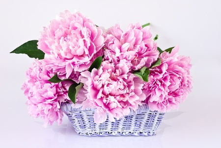 Basket of pink peonies on gray background