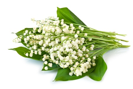 Bouquet of lilies of the valley isolated on white background photo