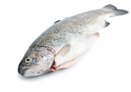 Fresh trout fish isolated on white background Stock Photo - 13830028