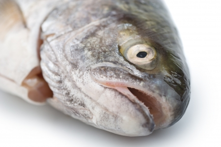 Fresh fish head close-up on white background Stock Photo - 13830035