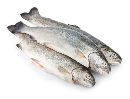 Three fresh trout fish isolated on white background diagonal Stock Photo - 14125023