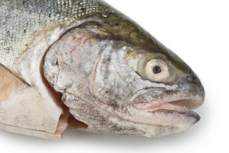 Fresh fish head close-up on white background Stock Photo - 14125028