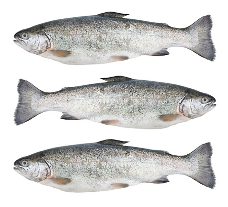 Three fresh trout fish isolated on white background Stock Photo - 14125037