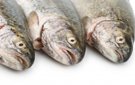 Fresh fish heads close-up on white background Stock Photo - 14125034
