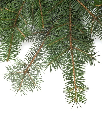 Christmas tree branches border over white background  with space for text  photo