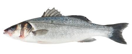 seabass: Bass pescado fresco del mar aislado en el fondo blanco Foto de archivo