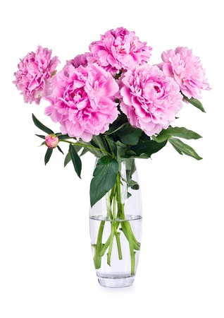 Vase of pink peony blooms, isolated on white background