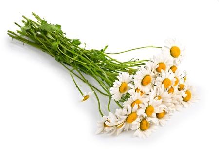 Fresh chamomile flowers isolated on white background Stock Photo