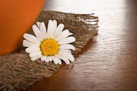 Chamomile flower on wooden background  photo