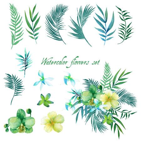 flores exoticas: Floral de la acuarela fija para su dise�o. Vectores