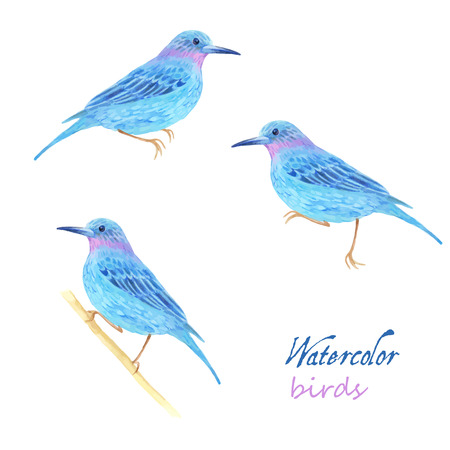 bird illustration: Watercolor bird collection for your design. Vector set.
