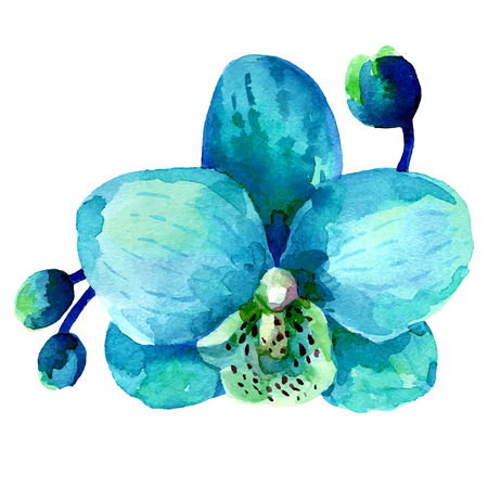 Orchid flower, watercolor illustration isolated on white background Illustration