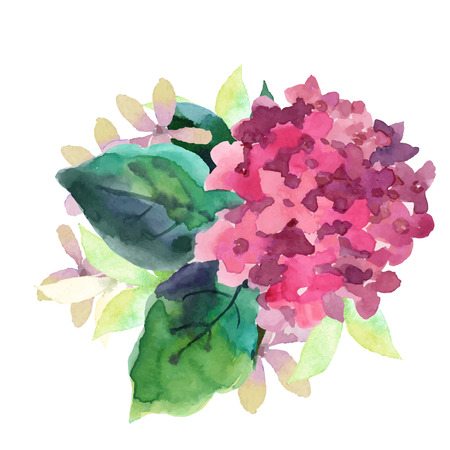 flower fields: Watercolor style vector illustration of Hydrangea. Vector blue summer flowers isolated on a white background.