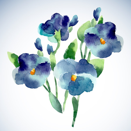 violet flower: Watercolor illustrations of violet flower isolated on white background. Background for your design and decor.
