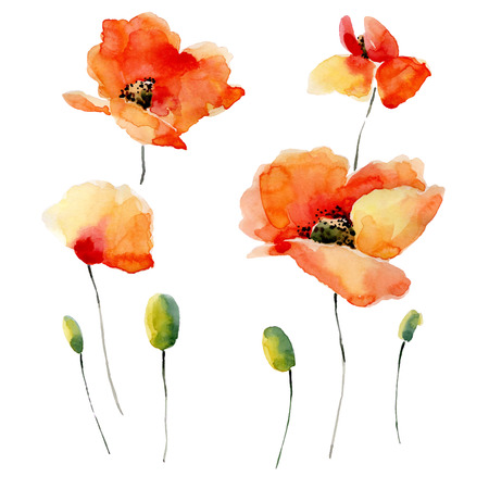 Watercolor illustration of a poppy on a white background. Background for your design and decor. Vettoriali