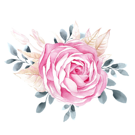 Watercolor illustrations of rose flower isolated on white background. Background for your design and decor.