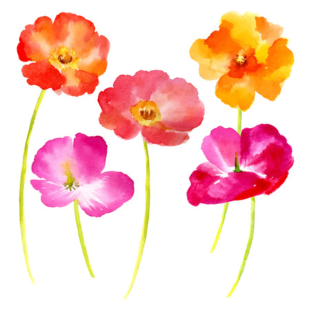 Watercolor illustration  flowers on a white background. Background for your design and decor. Illustration
