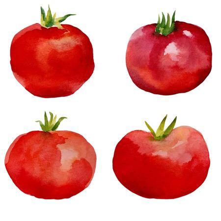 Watercolor set tomatoes, watercolor drawing design elements