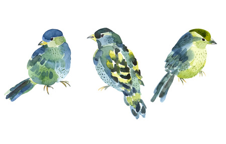 Watercolor bird collection for your design. Vector illustration.