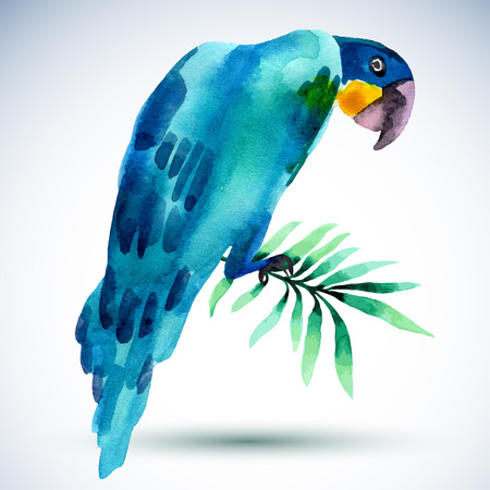primaries: Watercolor bird. Blue parrot isolated on white background. Vector   illustration for your design.