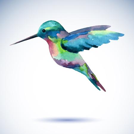 Colibrí pájaro pintura a la acuarela sobre el fondo blanco. Ilustración de la acuarela. Ilustración de vector