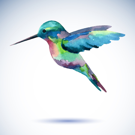 Hummingbird peinture à l'aquarelle oiseau sur le fond blanc. Illustration d'aquarelle. Vecteurs