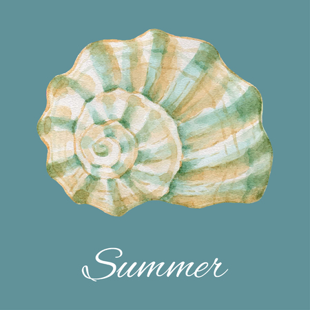 Watercolor hand painted sea shell for your design