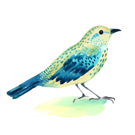 Watercolor illustration of a bird  on white background. Hand painted illustration Illustration