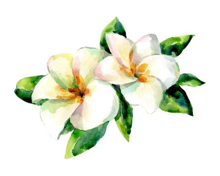 Illustration aquarelle de fleurs exotiques sur fond blanc. Fond pour votre conception et décor. Banque d'images - 63721260