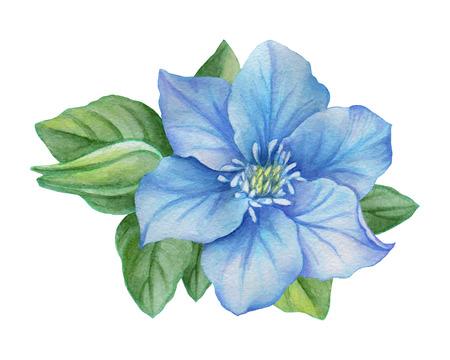 Illustration aquarelle d'une fleur bleue sur un fond blanc. Contexte pour votre design et votre décor. Banque d'images - 63721255