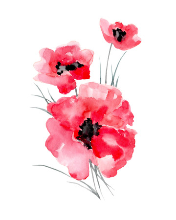 Watercolor illustration of a poppy on a white background. Background for your design and decor. Standard-Bild