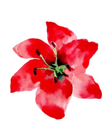 Illustration d'aquarelle d'une fleur rouge sur un fond blanc. Contexte pour votre design et la décoration. Banque d'images - 63721263
