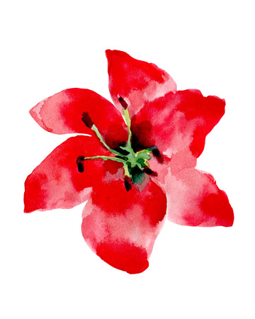 Watercolor illustration of a red flower on a white background. Background for your design and decor.