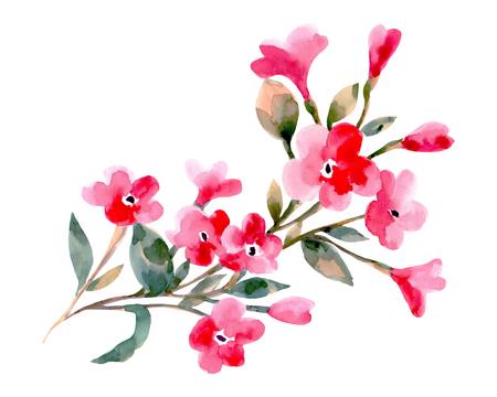 Aquarelle illustration d'un fleurs de cerisier sur un fond blanc. Contexte pour votre design et la décoration. Banque d'images - 63721266