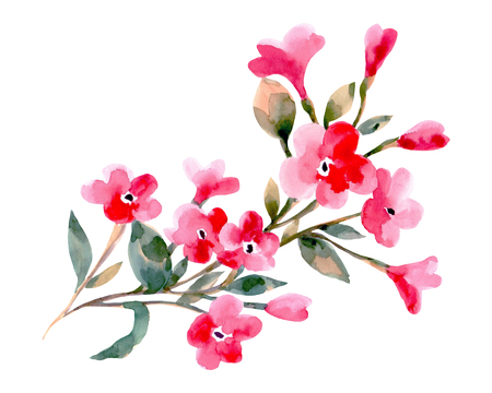 Watercolor illustration of a cherry flowers on a white background. Background for your design and decor.
