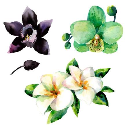 Aquarelle ensemble floral pour votre illustration de dessinés à la main design. Banque d'images - 67644486