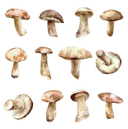 Set of watercolor mushrooms for your design. Hand drawn food background. Reklamní fotografie