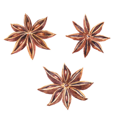 Watercolor set of christmas spice. Anise hand painted illustration on white background