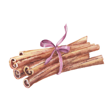 Watercolor set of christmas spice. Cinnamon hand painted illustration on white background
