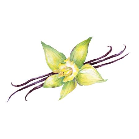Watercolor set of christmas spice. Vanilla hand painted illustration on white background Standard-Bild