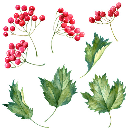 Watercolor leaves with red berries on white background. Hand drawn autumn set. Standard-Bild