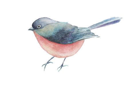 Illustration aquarelle oiseau dessinés à la main, isolé sur fond blanc. Banque d'images - 67674008