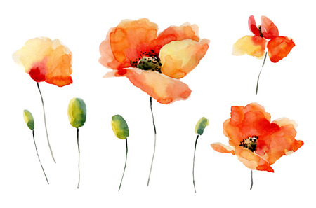 Set of watercolor poppy flowers on a white background. Background for your design and decor. Standard-Bild