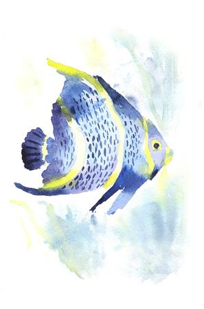 Exotic fish on white background.