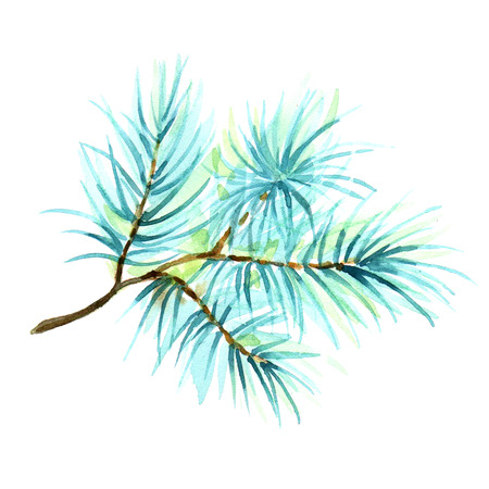Watercolor illustration of a branch of spruce, pine, fir-tree, isolated on white background.