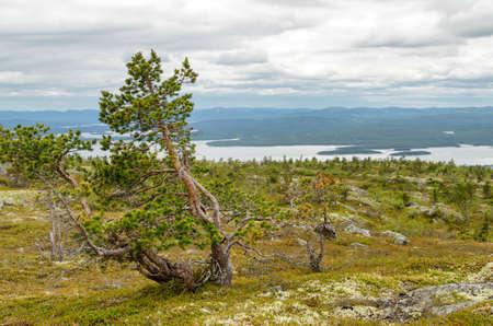 The nature of the north, Kandalaksha. Russia