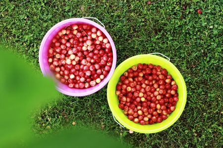 buckets filled with cherries