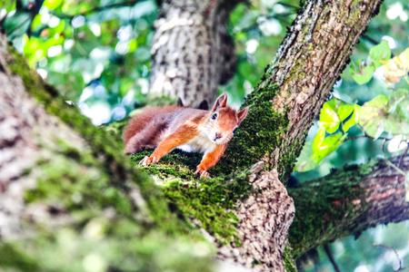 squirrel on a tree Фото со стока