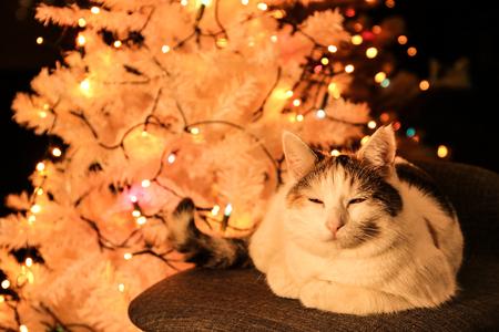 white cat lying by the christmas tree Фото со стока
